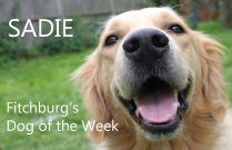 dog-of-the-week-demo